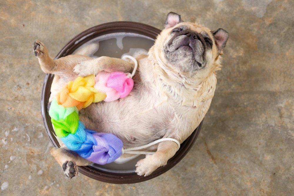 Top Flea Shampoos for Pets