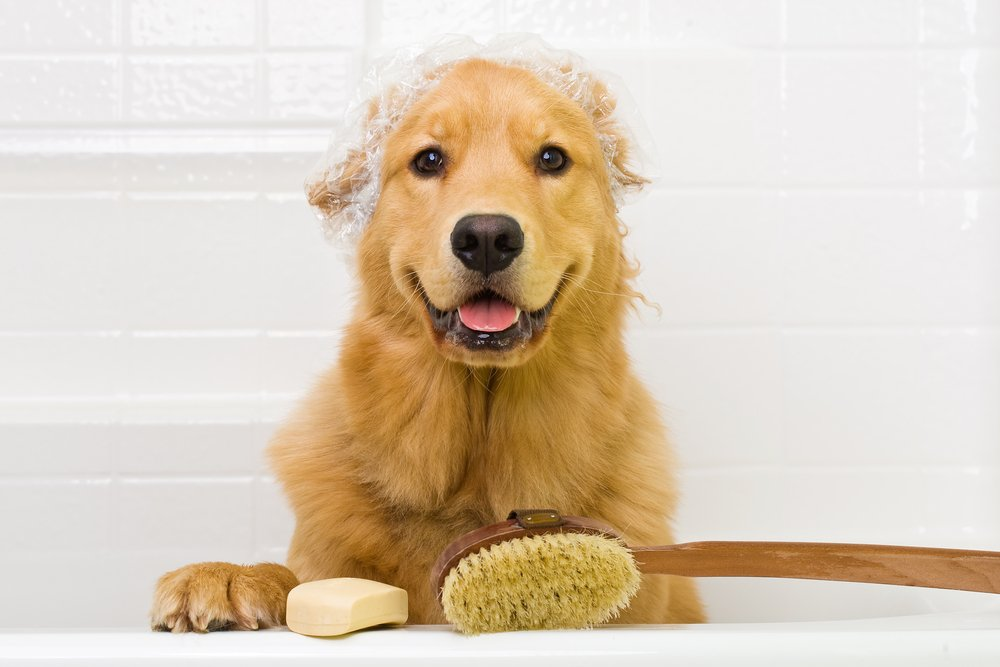 outstanding flea shampoo for pets