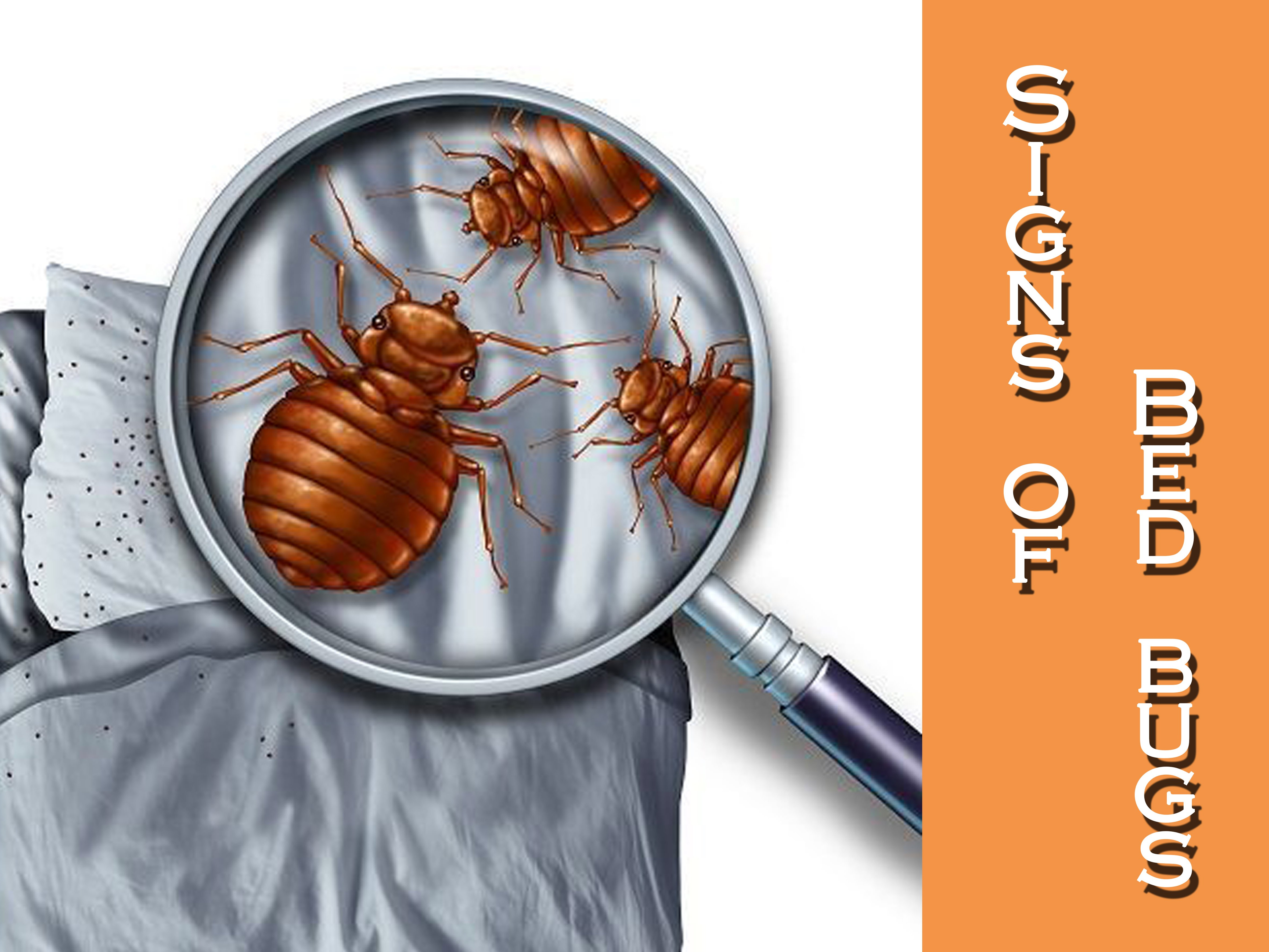 Tremendous 9 Bed Bug Signs Symptoms In Your Home Pest Wiki Home Interior And Landscaping Mentranervesignezvosmurscom