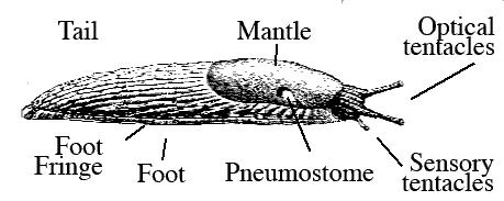 slug Life system