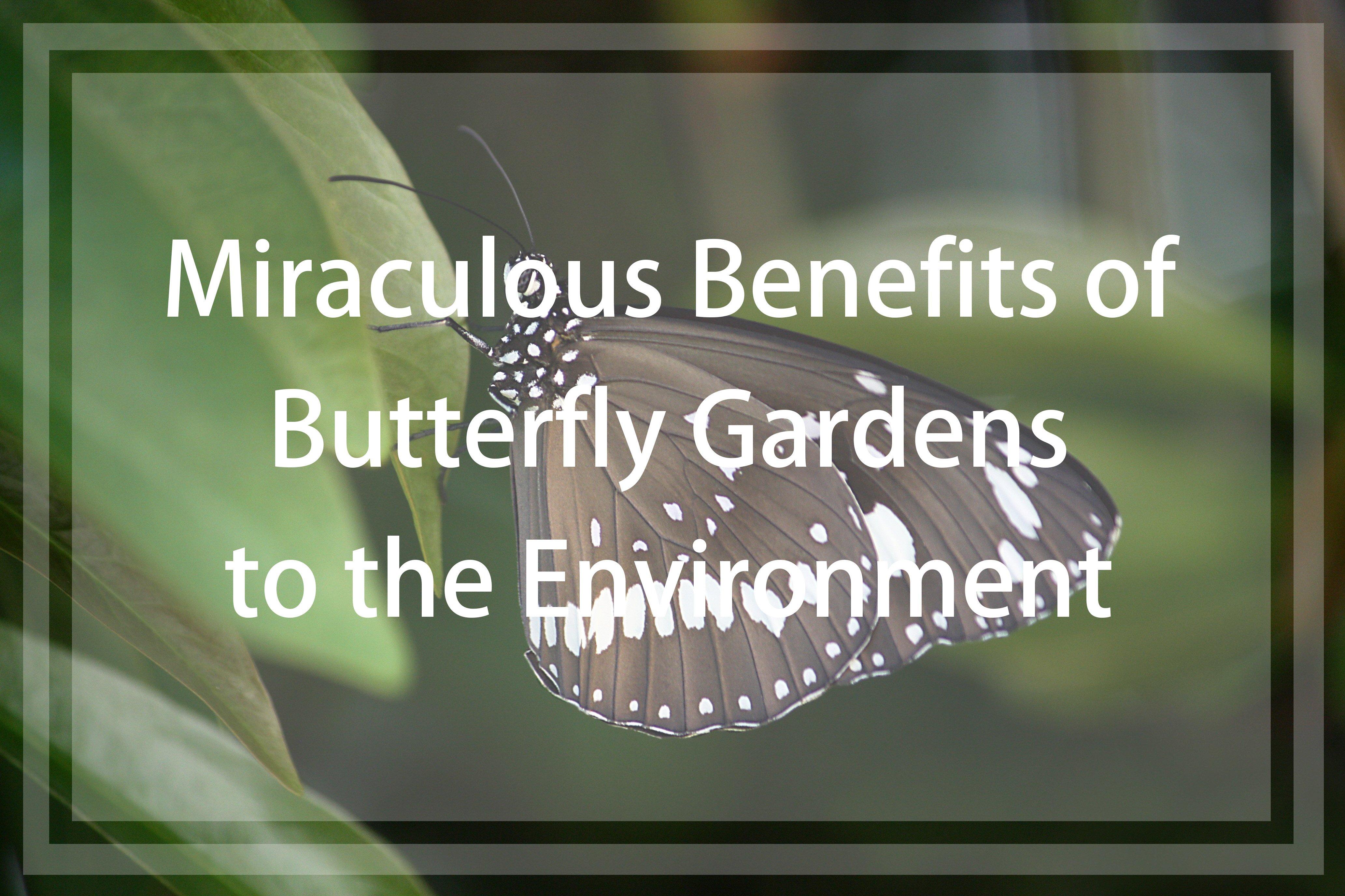 butterfly environmental benefits