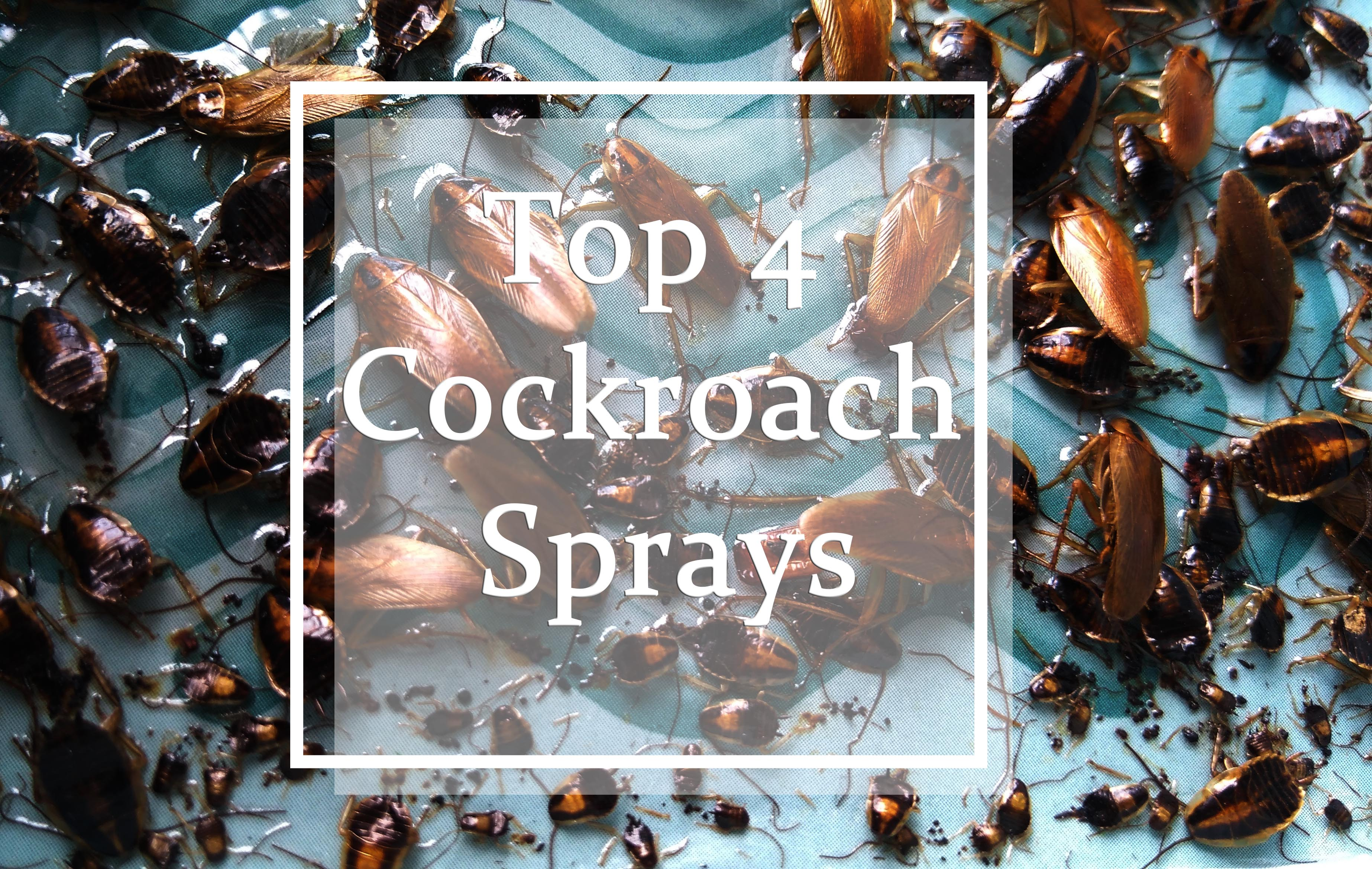 Best Cockroach Sprays