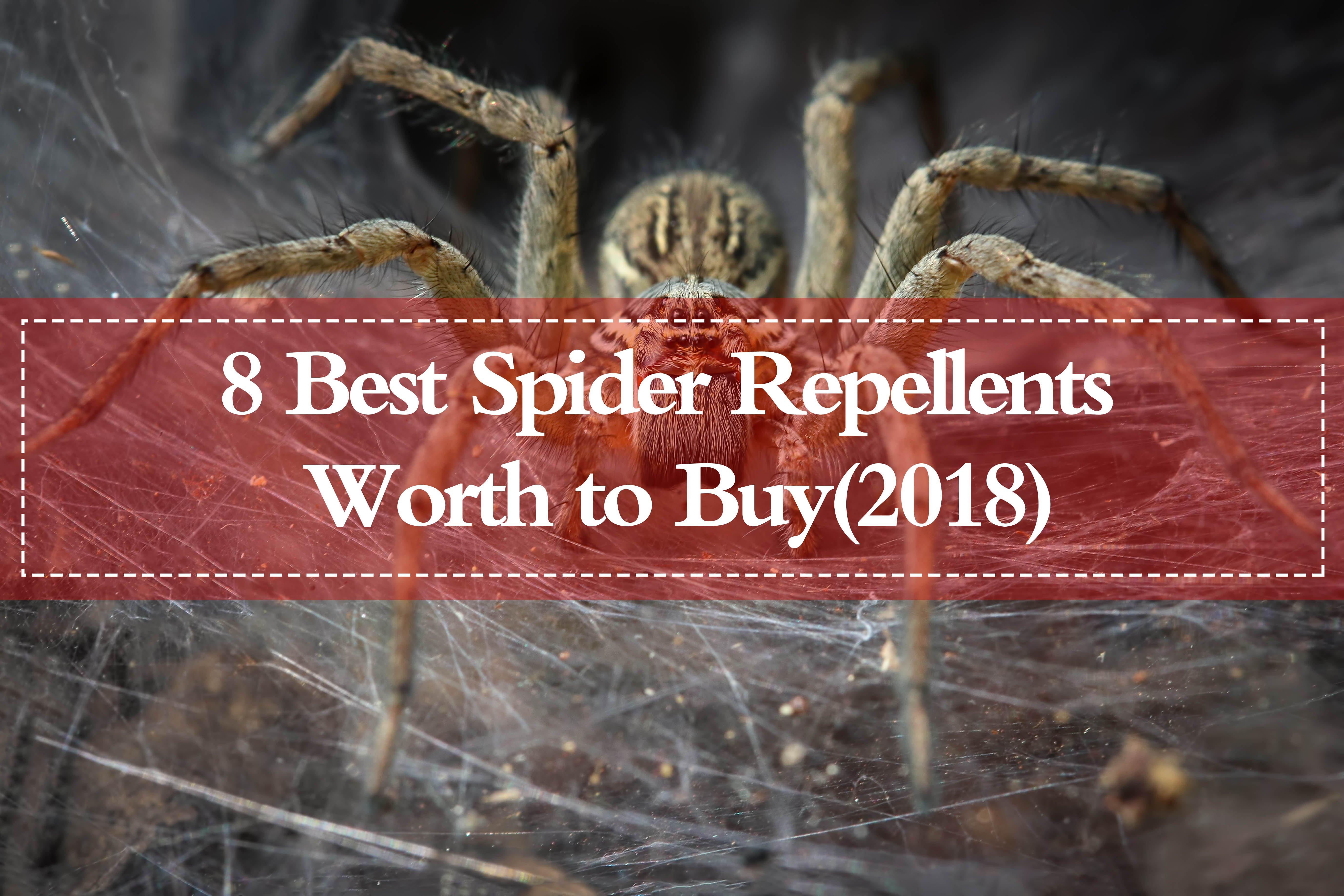 Best spider repellents