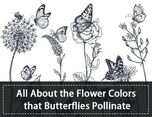 Butterflies Pollinate