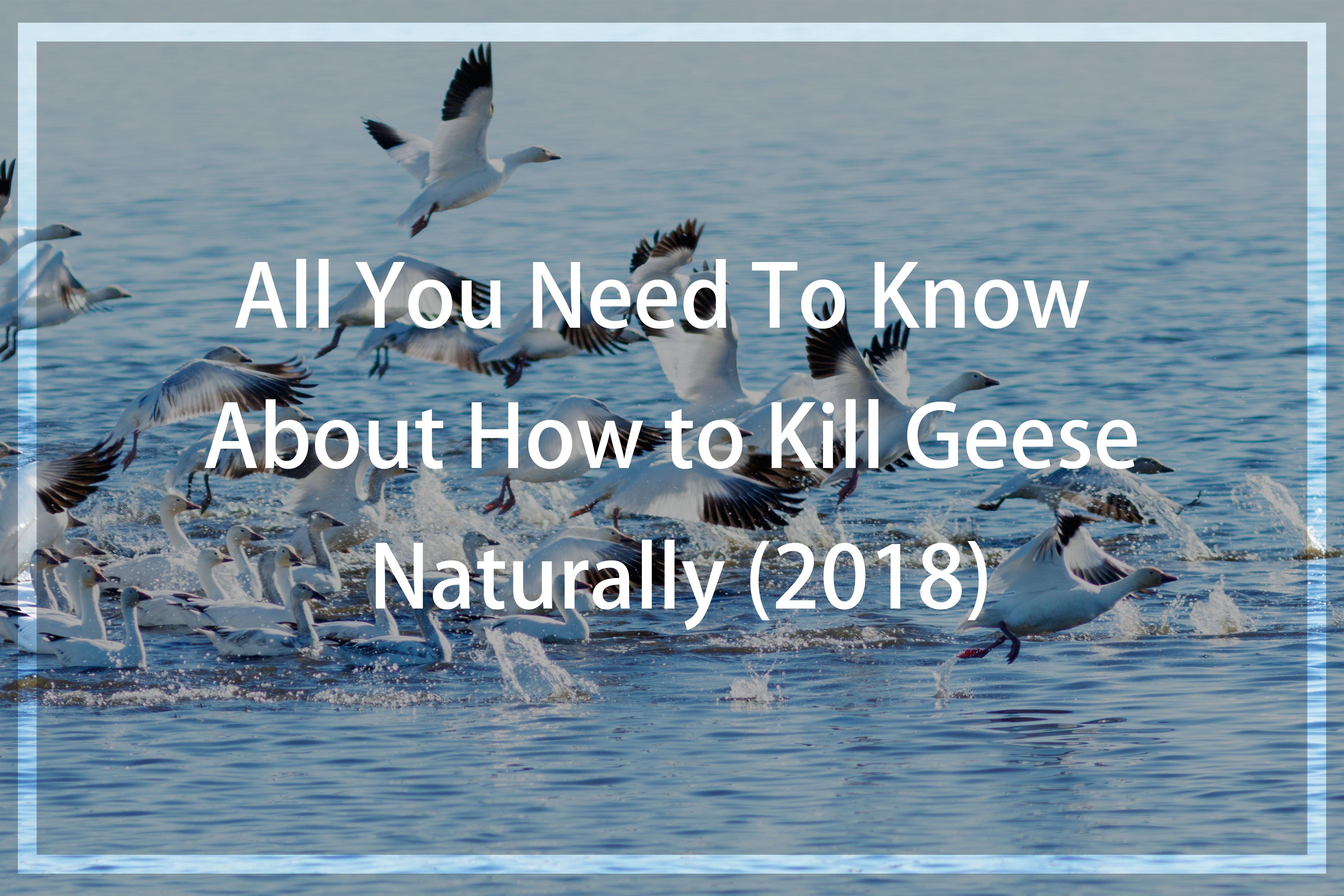 Kill Geese Naturally