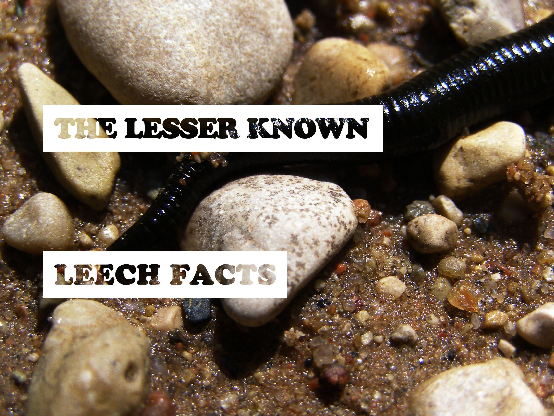 Leech Facts