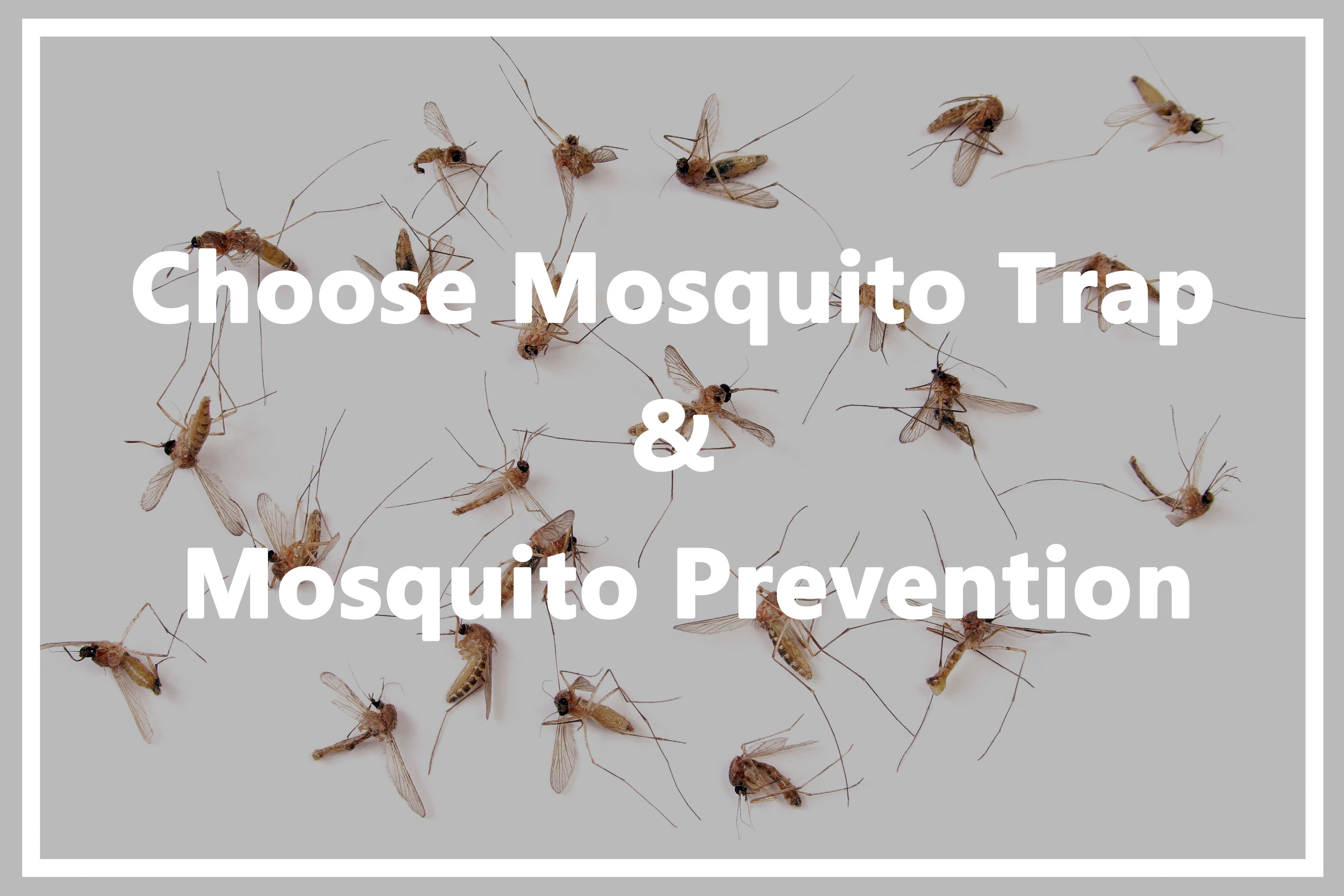 How to kill mosquitoes at home correctly