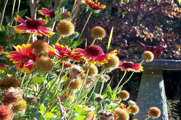 Plants Attract Birds and Beneficial Insects
