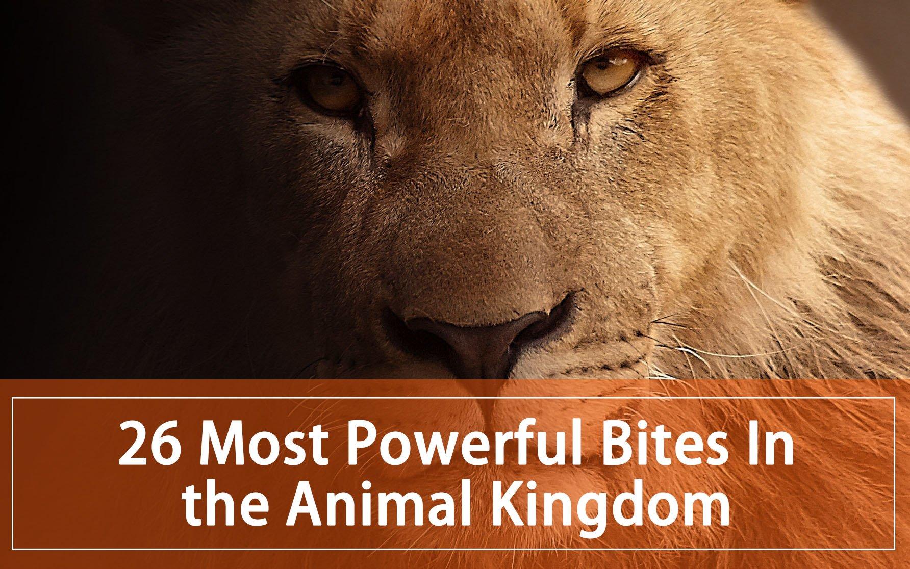 26 Most Powerful Bites in the Animal Kingdom (2019) - Pest Wiki