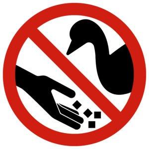 Stop Feeding Geese