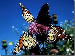 The Way Butterflies View the World