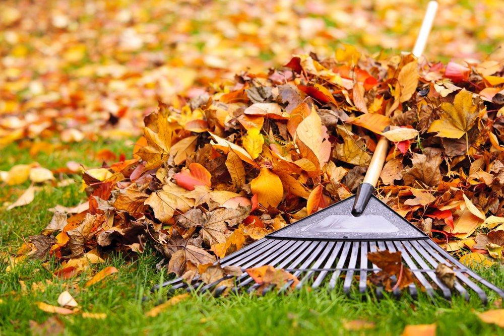remove dead leaves