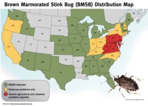 Expansion of Brown Marmorated Stink Bugs