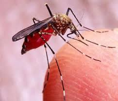 Assassin Bug Bites