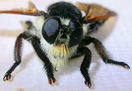 Bee Killers