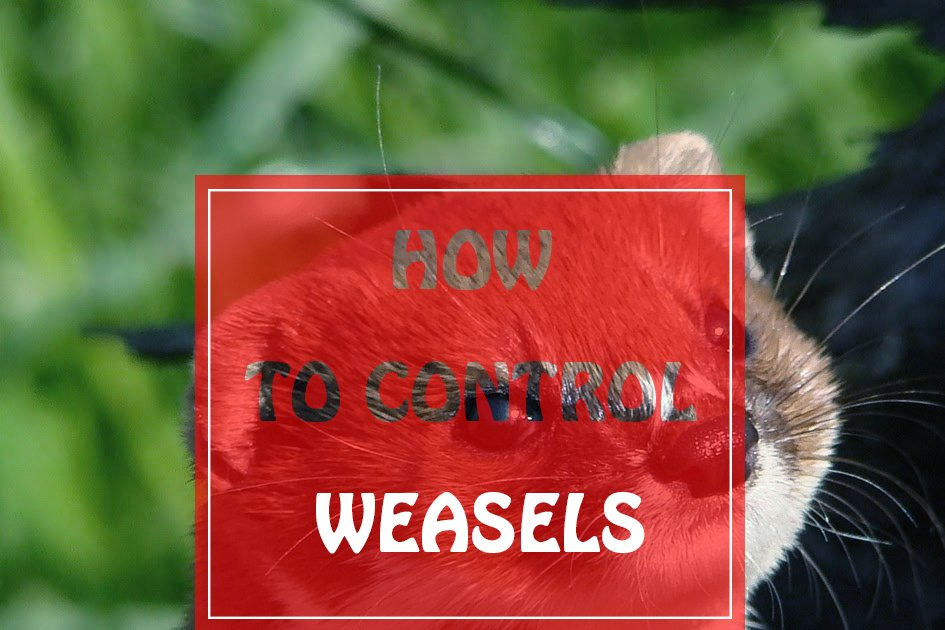 Control Weasels