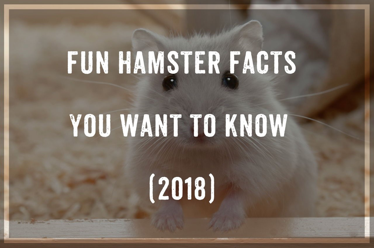 Hamsters - Fun Hamsters Facts You Want To Know (2018) - Pest