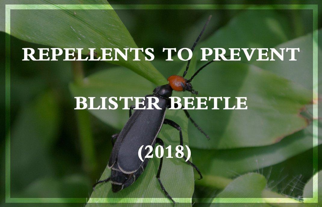 Prevent Blister Beetle