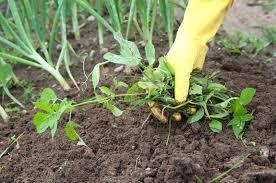 Reduce Weeds