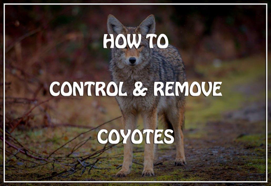 Remove Coyotes