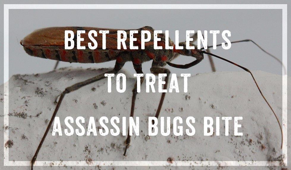 Treat Assassin Bugs Bite