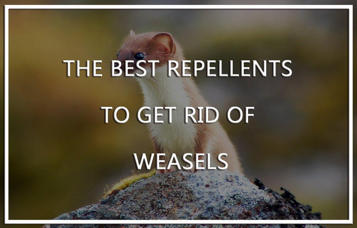 Weasel Repellents