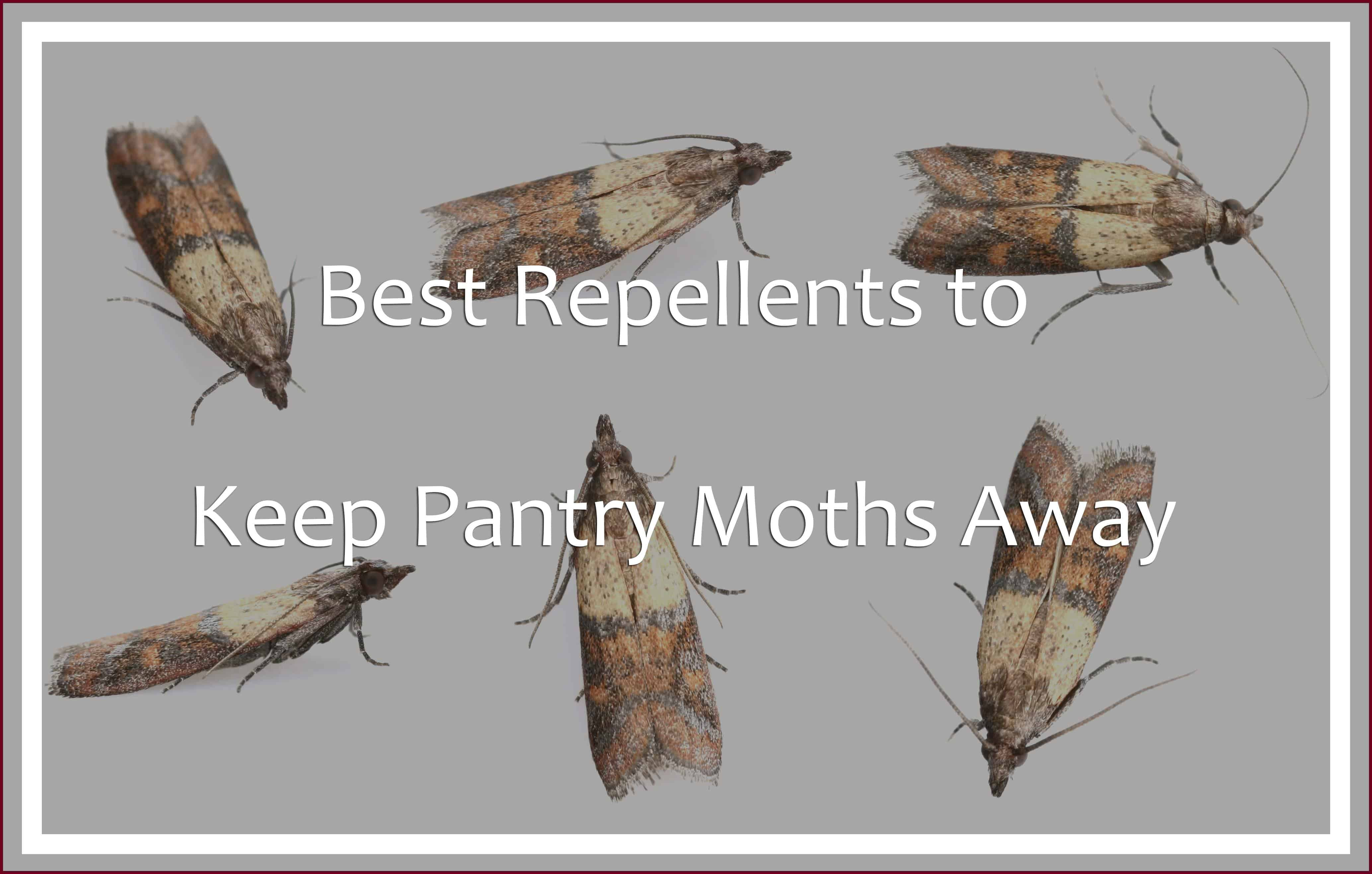 Repellents to Keep Pantry Moths away