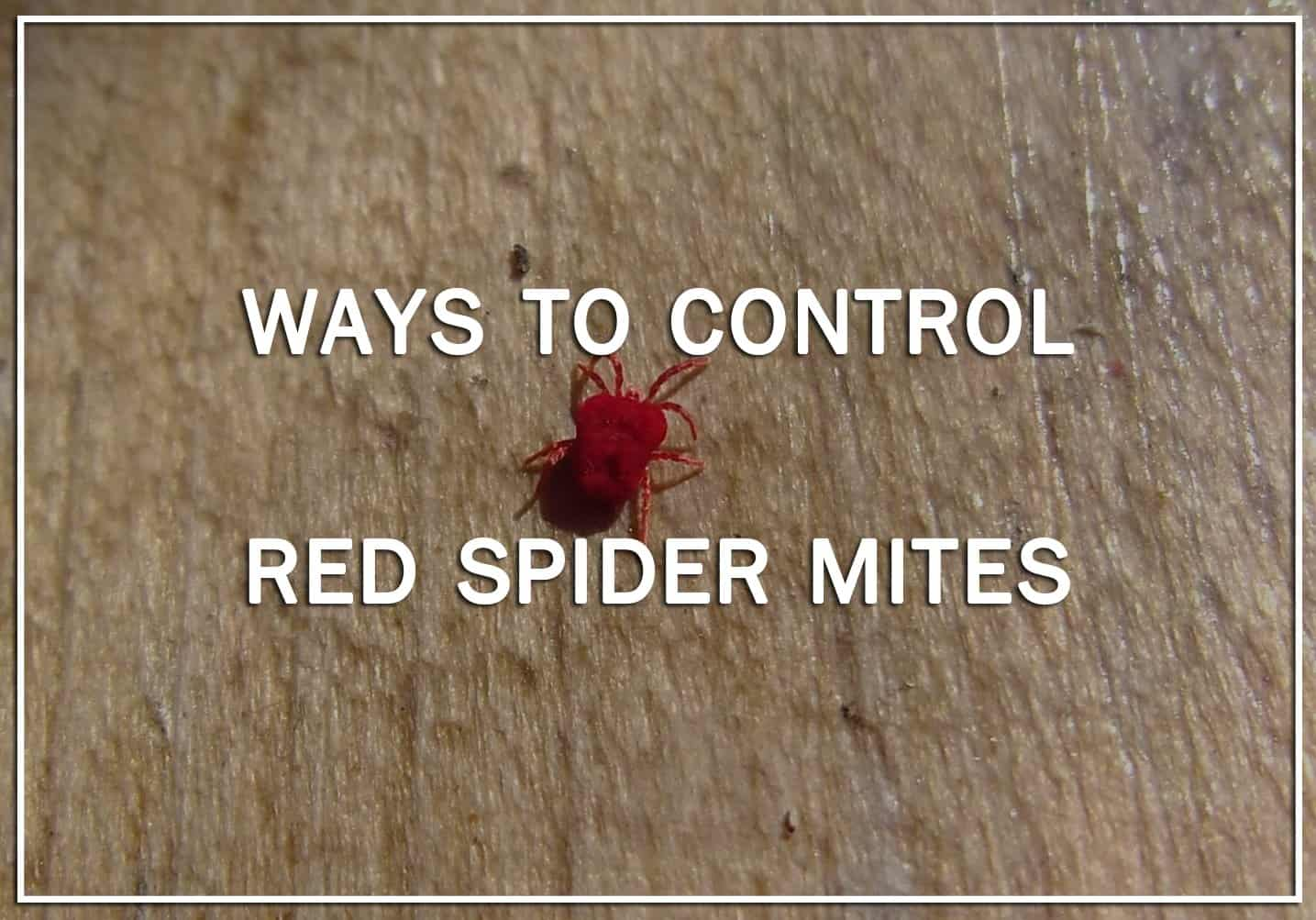 10 Ways to Control Red Spider Mites by