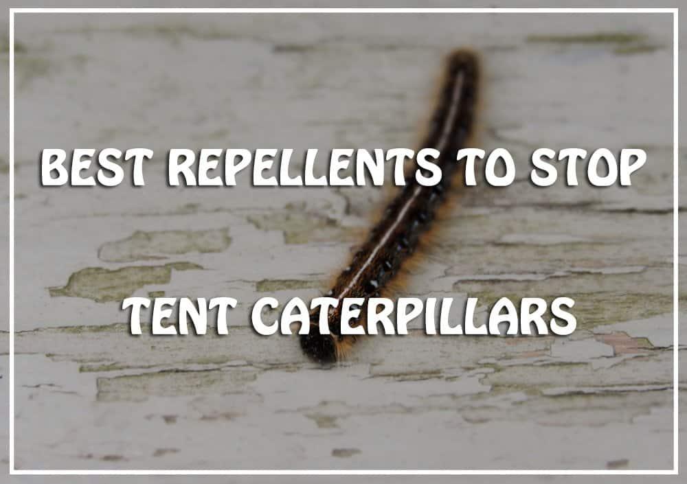 Best Tent Caterpillars Repellents