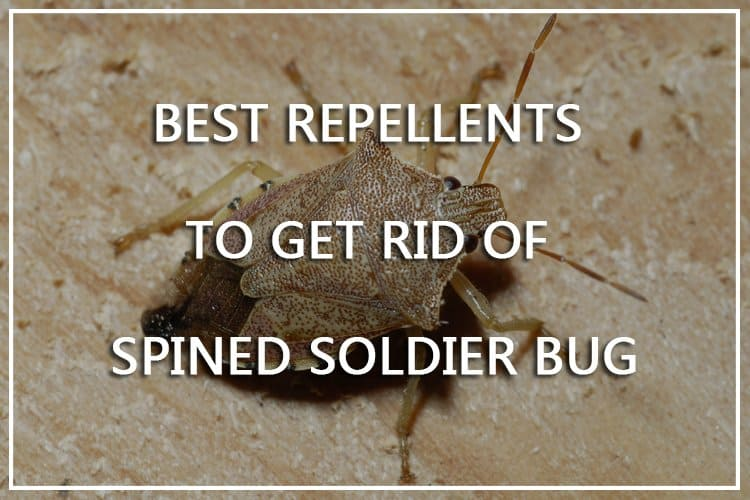 Best Spined Soldier Bug Repellents