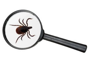 a tick under magnifying glass