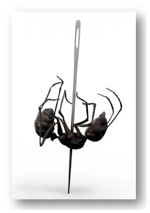 Concept of ant killing