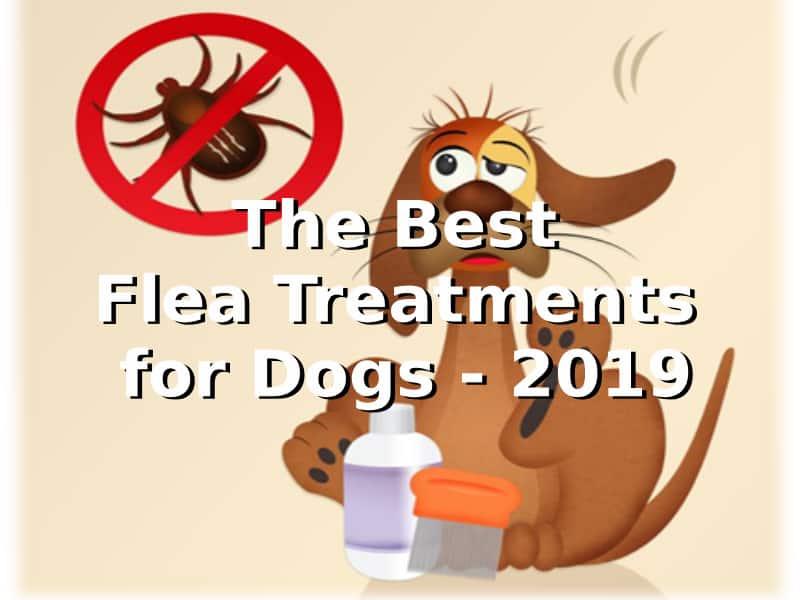 Dog with ticks and fleas