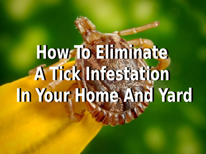 How To Eliminate A Tick Infestation In Your Home And Yard