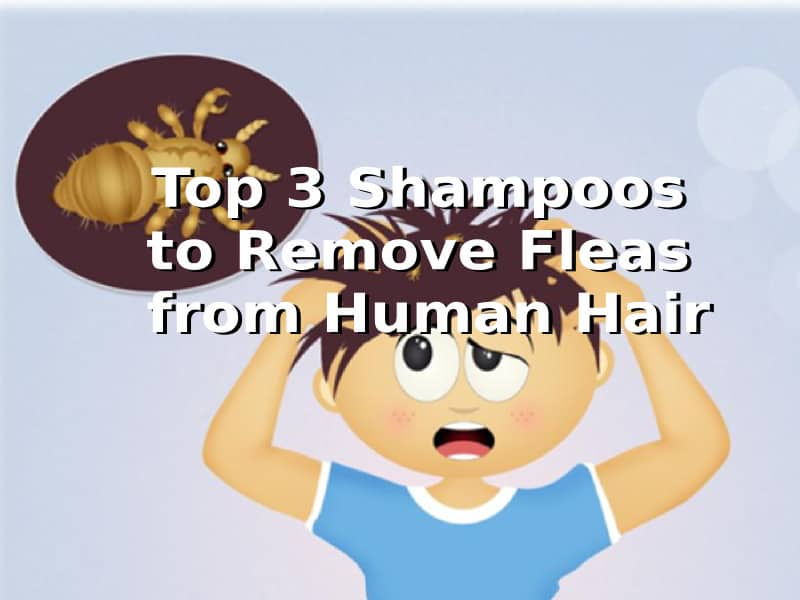 Top 3 Best Flea Shampoo Human Hair (Reviewed 2019)