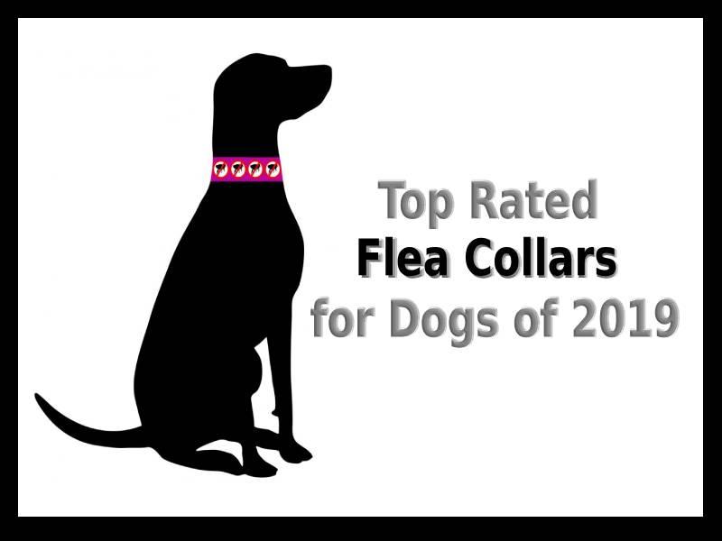 Best Dog Flea Collars