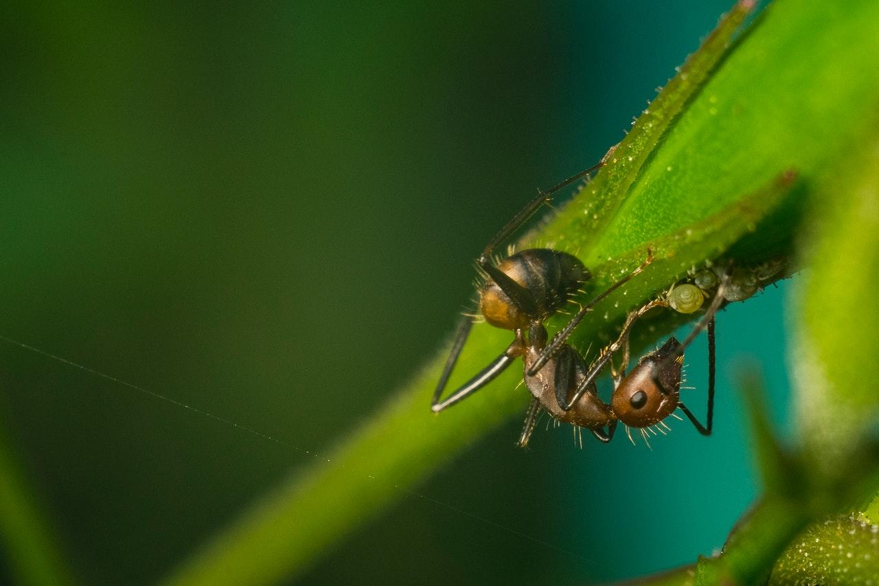 animal-photography-ant