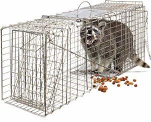 Oxgord live mole trap